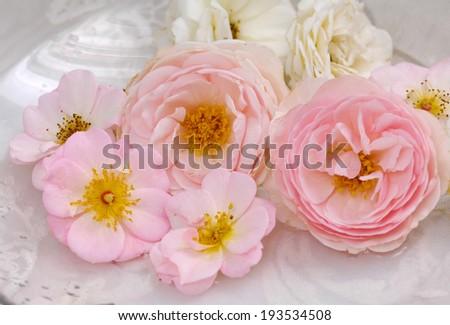 Set of many rose on the white lace background - stock photo