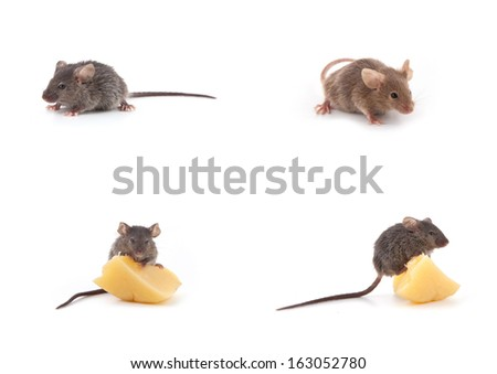 Set of mice, Mouse and cheese isolated on a white background