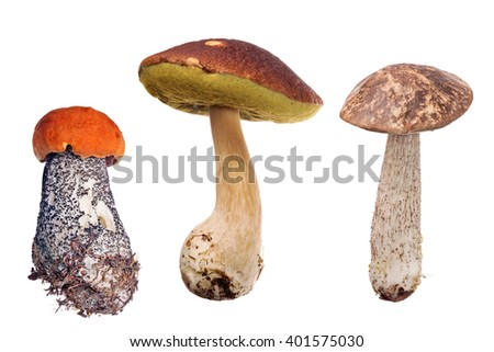 set of mushrooms isolated on white background - stock photo
