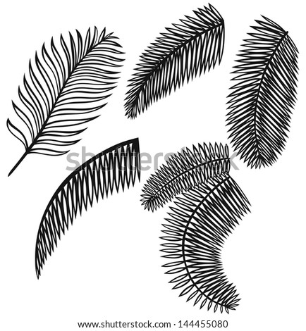 Set of palm leaves isolated on white background. Raster version - stock photo