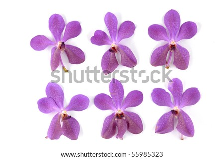 Set of pink orchid - stock photo
