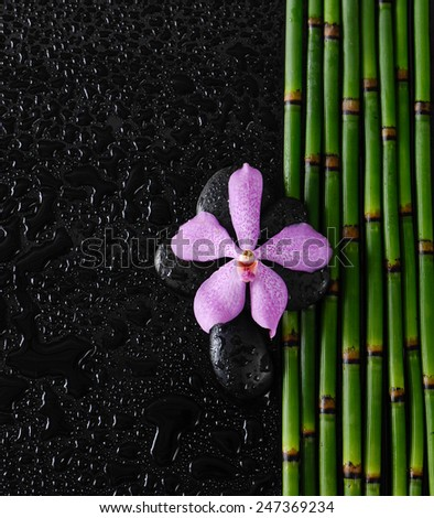 Set of  pink orchid with bamboo grove on wet  - stock photo