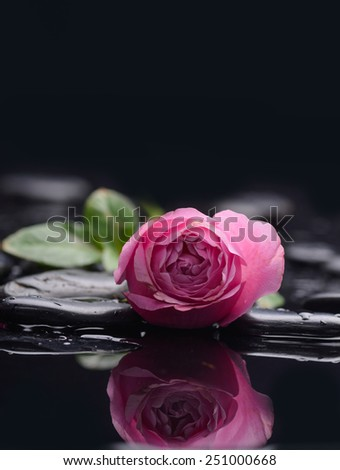 Set of pink orchid with therapy stones  - stock photo
