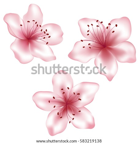 Set of pink vector flower illustrations, isolated on white. Spring blossom element for spring design. Clip art, icon isolated on white. Peach blooming, apricot bloom, sakura or cherry blossom flower.