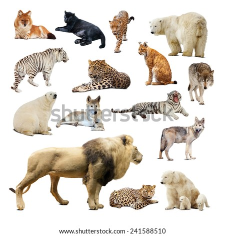 Set of predatory animals. Isolated over white background with shadows - stock photo