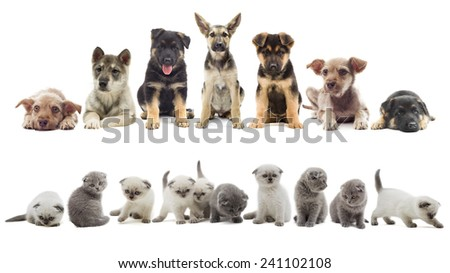 set of puppies and kittens - stock photo