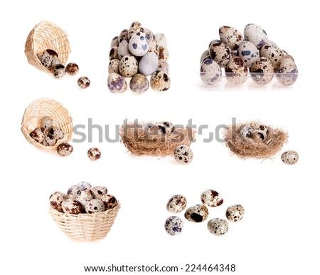 set of quail eggs in isolation - stock photo