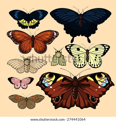 Set of realistic images of beautiful butterflies and moths, isolated on neutral background (raster version) - stock photo