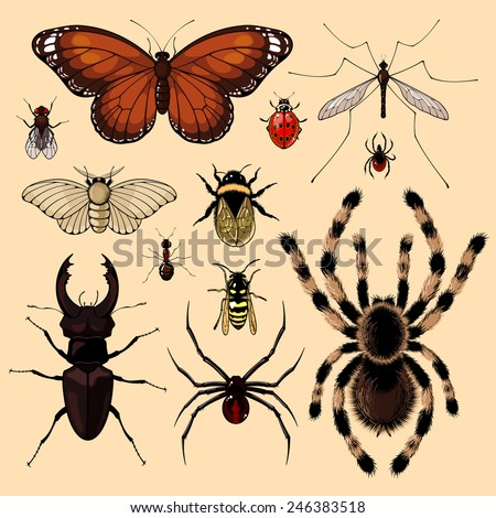 Set of realistic images of insects (raster version) - stock photo