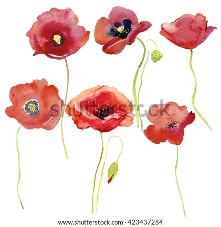 set of red  poppy flowers. Watercolor illustration.