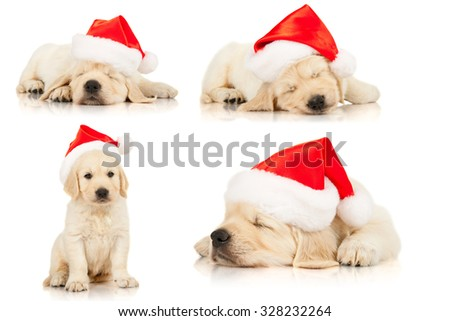Set of retriever puppies in a Santa Claus hat, isolated on white - stock photo