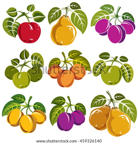 Set of ripe fruits and berries with green leaves, fruity trees design elements isolated on white background. - stock photo