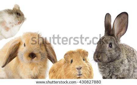 set of rodents, rabbit and guinea pig and hamster - stock photo