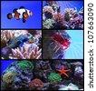Set of salt water aquarium fish - stock photo