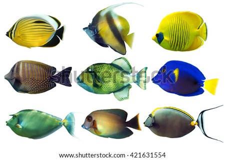 Set of sea -nr.3- reef fish on white background