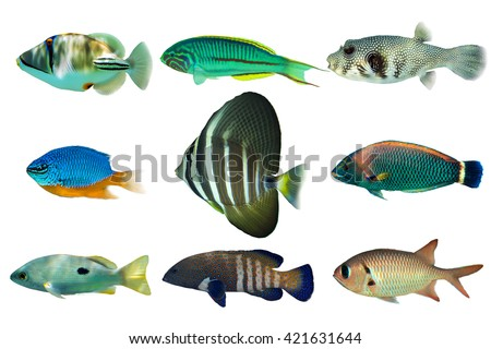 Set of sea -nr.1- reef fish on white background