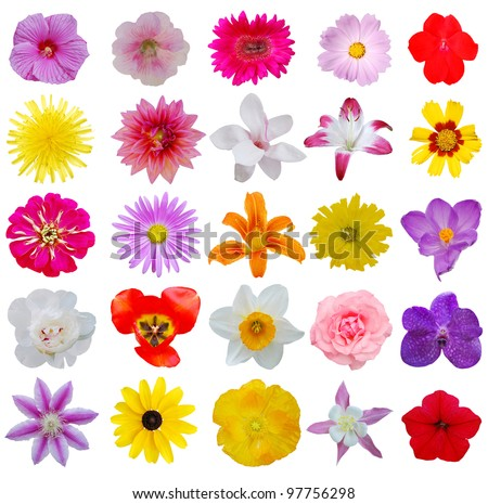 Set of seasonal spring flowers - stock photo