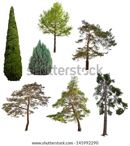 set of seven coniferous trees isolated on white background - stock photo