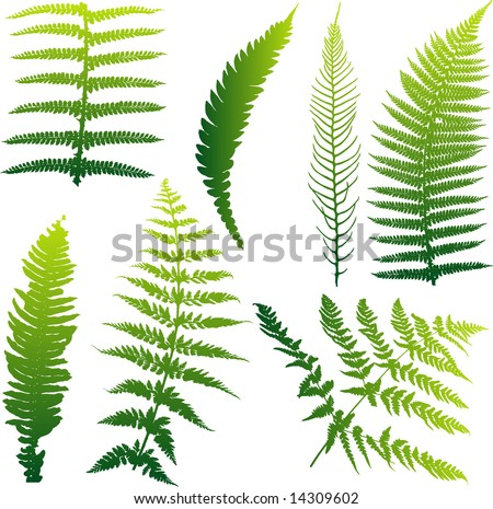 Set of seven vector ferns from New Zealand. Colors can be easily changed. Also available as vector.