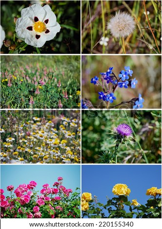 Set of several pictures of flowers taken in the field. Daisy, petunia, dandelion, rose, thistle. - stock photo