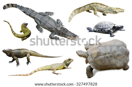 set of several reptilian. Isolated on white - stock photo