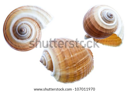 set of shell isolated on a white background - stock photo