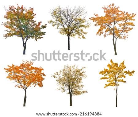 set of six autumn trees isolated on white background - stock photo