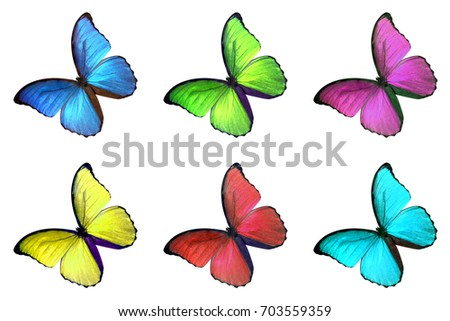 Set Six Colorful Butterfly Isolated On Stock Photo (Royalty Free ...