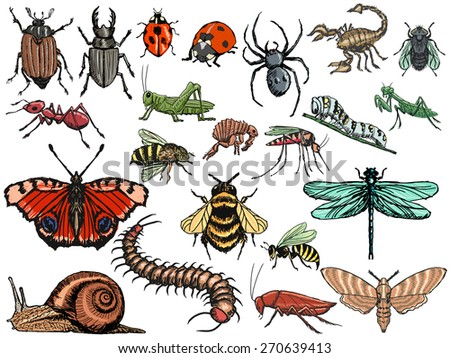 set of sketch, editable illustrations of insects