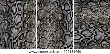 Set of snakeskin leather textures closeup for background - stock photo