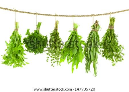 Set of Spice Herbs  /  isolated on white background /  bunches of thyme, basil, oregano, parsley, sage and rosemary are hanging and drying - stock photo