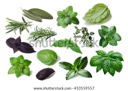 Set of spicy herbs. Separate clipping paths for both leaves and shadows, infinite depth of field. Herbes de Provence, mediterranean cuisine