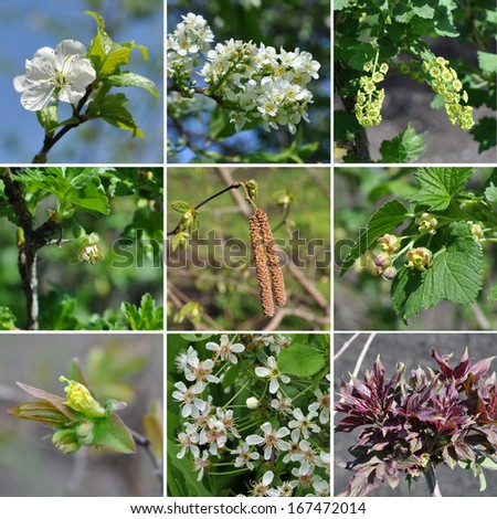Set of spring flowers of trees and shrubs - stock photo