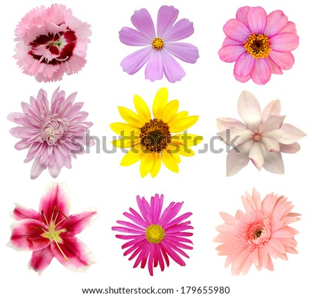 set of 9 summer flowers, America plants