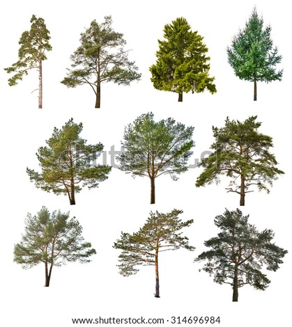 set of ten coniferous trees isolated on white background - stock photo