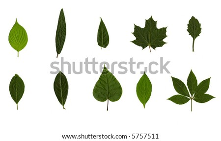 set of ten tree leaves isolated on white background