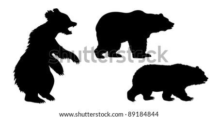 set of the bears on white background - stock photo
