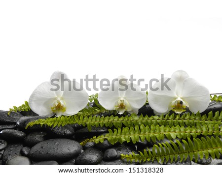 Set of three orchid with green fern on pebbles
