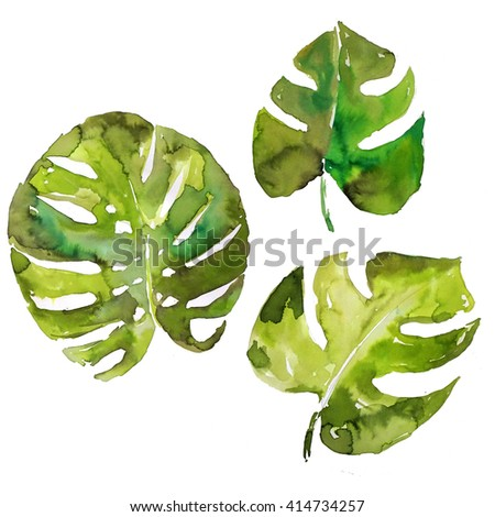 Set of three palm leaves isolated watercolor