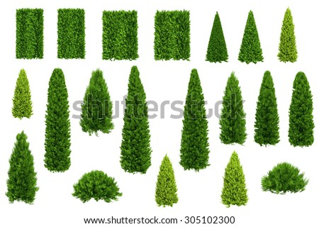 Set of thuja and juniper trees isolated on white background