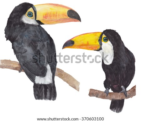 SEt of Toucans (Ramphastos toco) sitting on tree branch. Watercolor illustration. - stock photo