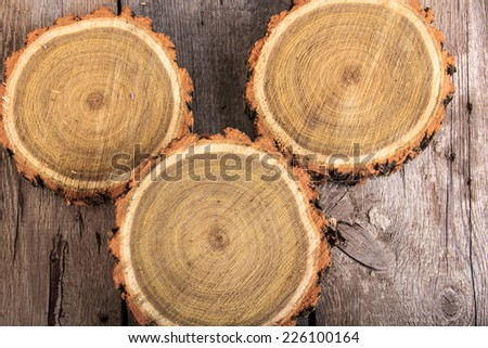 Set of tree stumps round cut with annual rings showing wood circle texture - stock photo