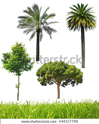 Set of trees and green grass - stock photo