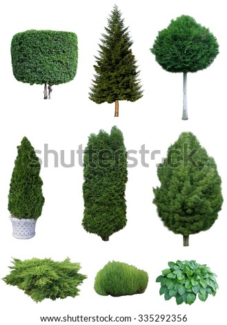 Set Trees Shrubs Set Various Evergreen Stock Photo (Edit Now ... on
