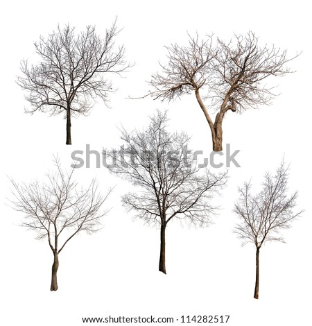set of trees without leaves isolated on white background