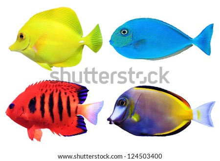 Set of tropical sea fish isolated on white background - stock photo