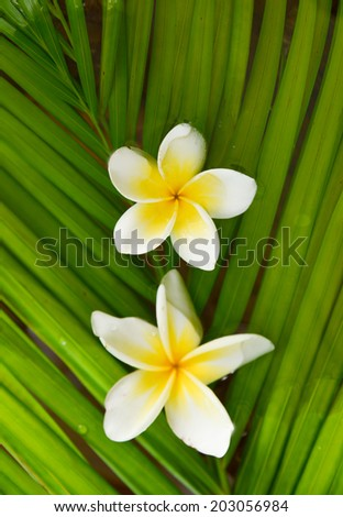 Set of two frangipani and palm leaf  - stock photo