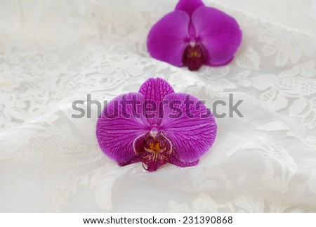 Set of two red orchid on the white lace background - stock photo