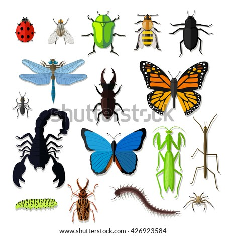 Set of various insects design flat. Bug and butterfly, ant and bee, spider and fly, ladybug and dragonfly, grasshopper wildlife, creature cockroach isolated on white background.  illustration - stock photo