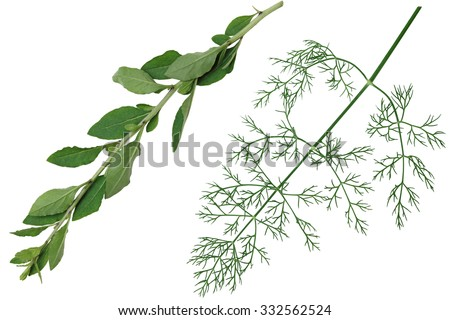 Set of vegetable herb leaf isolated on white background - stock photo
